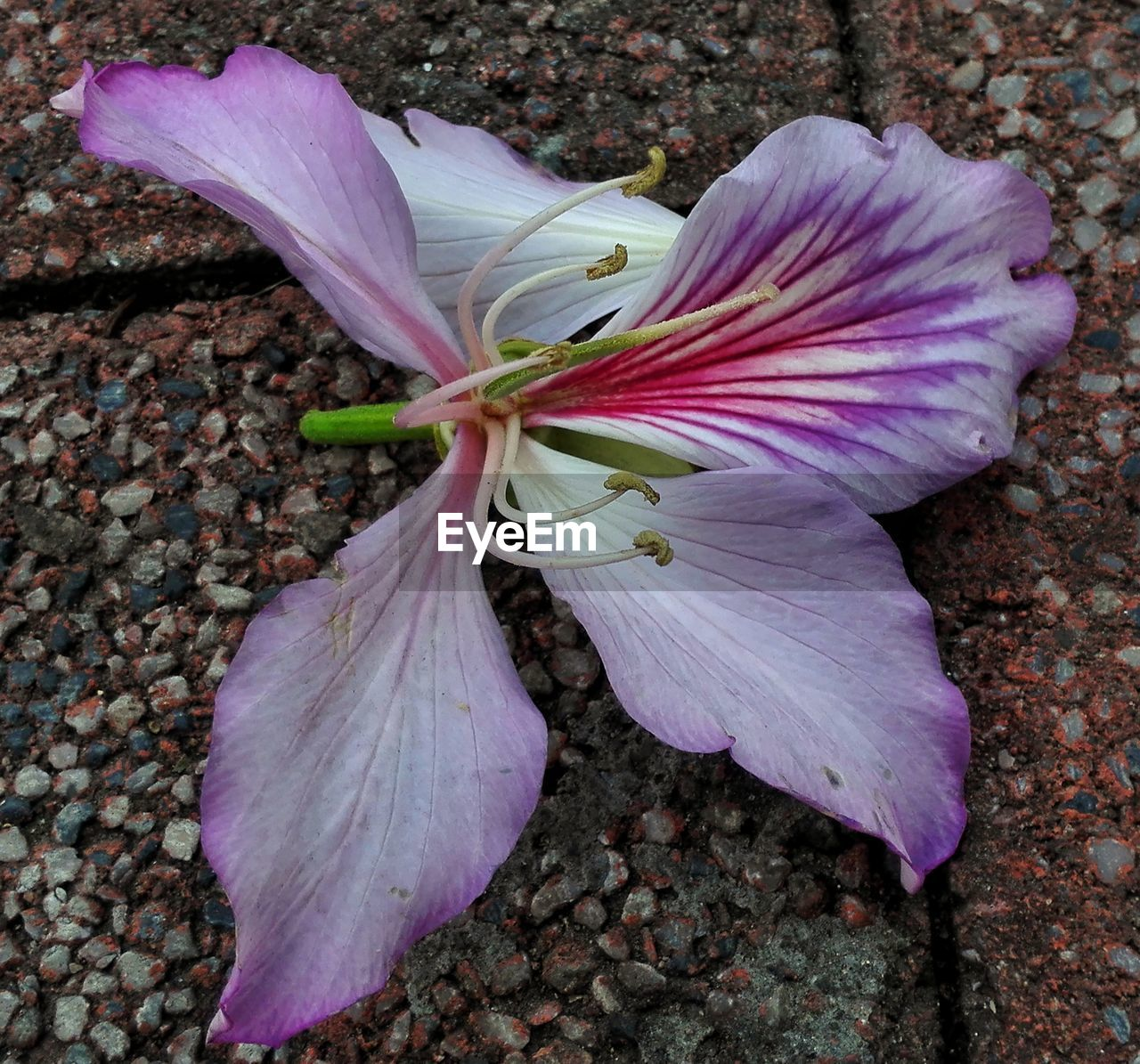 flower, petal, fragility, flower head, nature, growth, beauty in nature, no people, close-up, blooming, freshness, plant, day, outdoors
