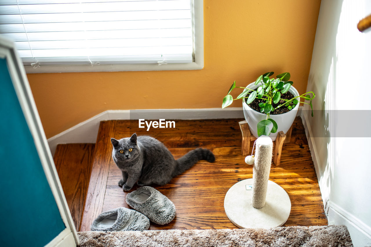 animal themes, mammal, animal, cat, feline, one animal, domestic, domestic cat, pets, domestic animals, vertebrate, window, no people, indoors, window sill, day, potted plant, sitting, home interior, looking, whisker
