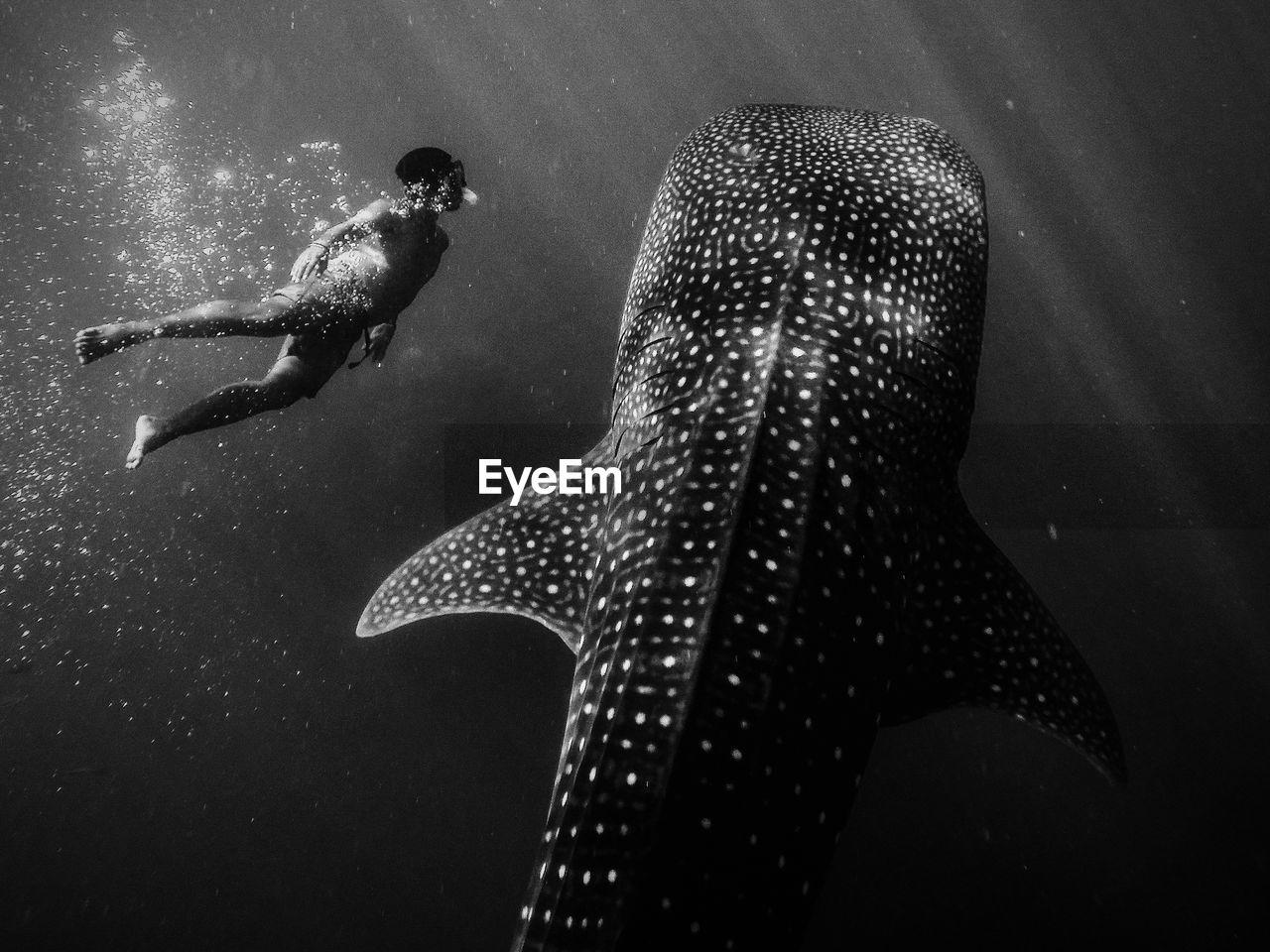 sea, underwater, water, swimming, animal wildlife, one person, one animal, animals in the wild, vertebrate, nature, indoors, sea life, marine, undersea, swimming pool