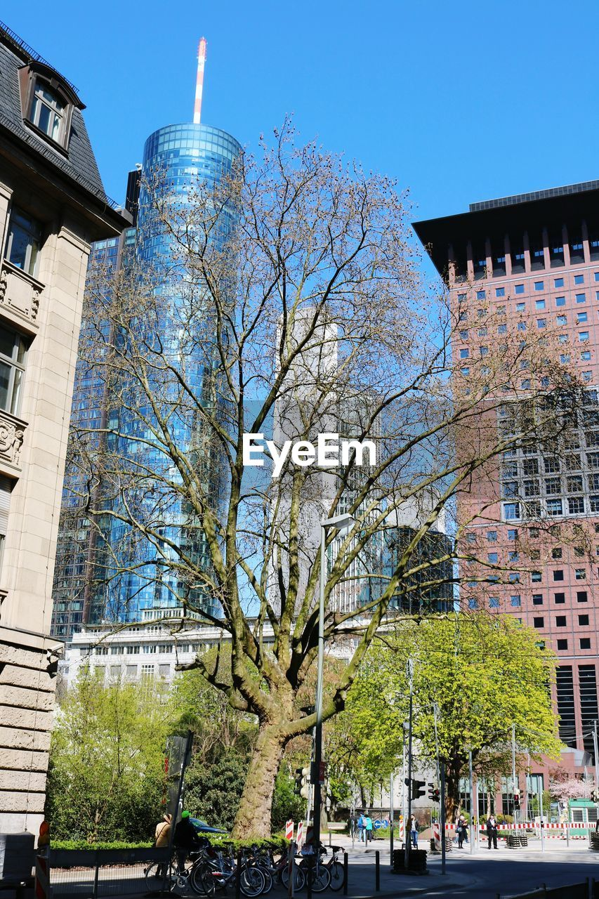 architecture, building exterior, built structure, tree, city, outdoors, day, branch, bare tree, growth, travel destinations, blue, sky, nature, no people