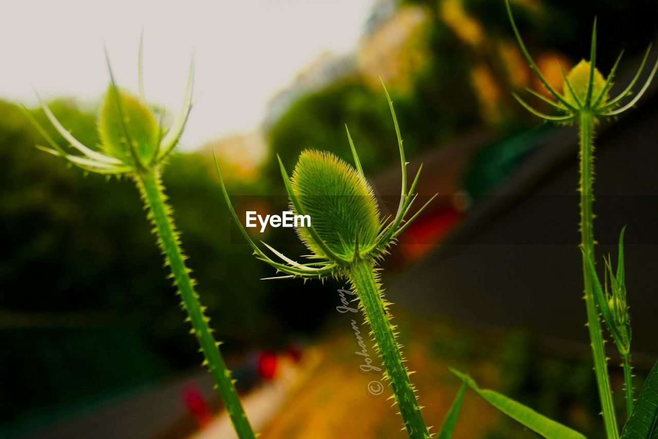growth, plant, green color, nature, leaf, close-up, beauty in nature, focus on foreground, no people, day, fragility, new life, outdoors, freshness