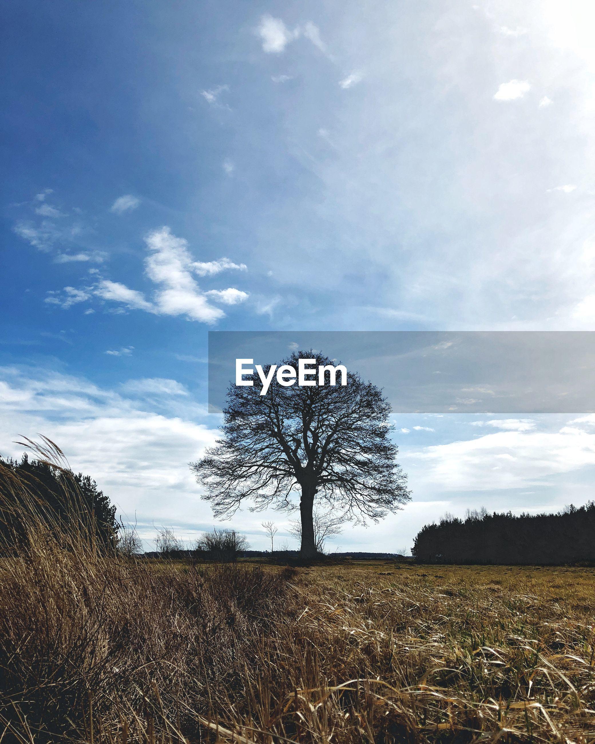 BARE TREE IN FIELD AGAINST SKY