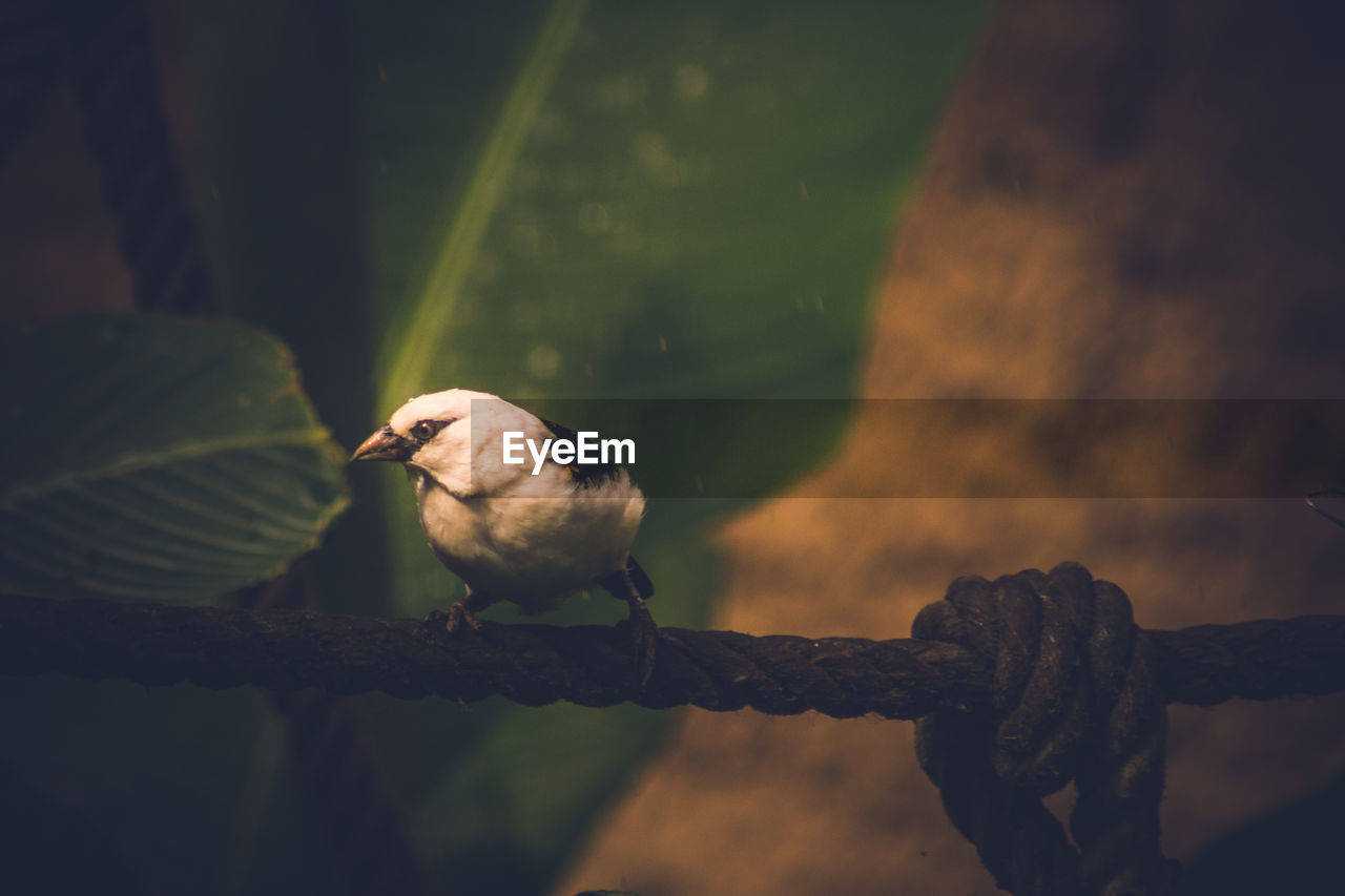 bird, animal, animal themes, animal wildlife, perching, vertebrate, animals in the wild, one animal, no people, focus on foreground, nature, day, branch, outdoors, close-up, tree, selective focus, full length, sparrow, metal