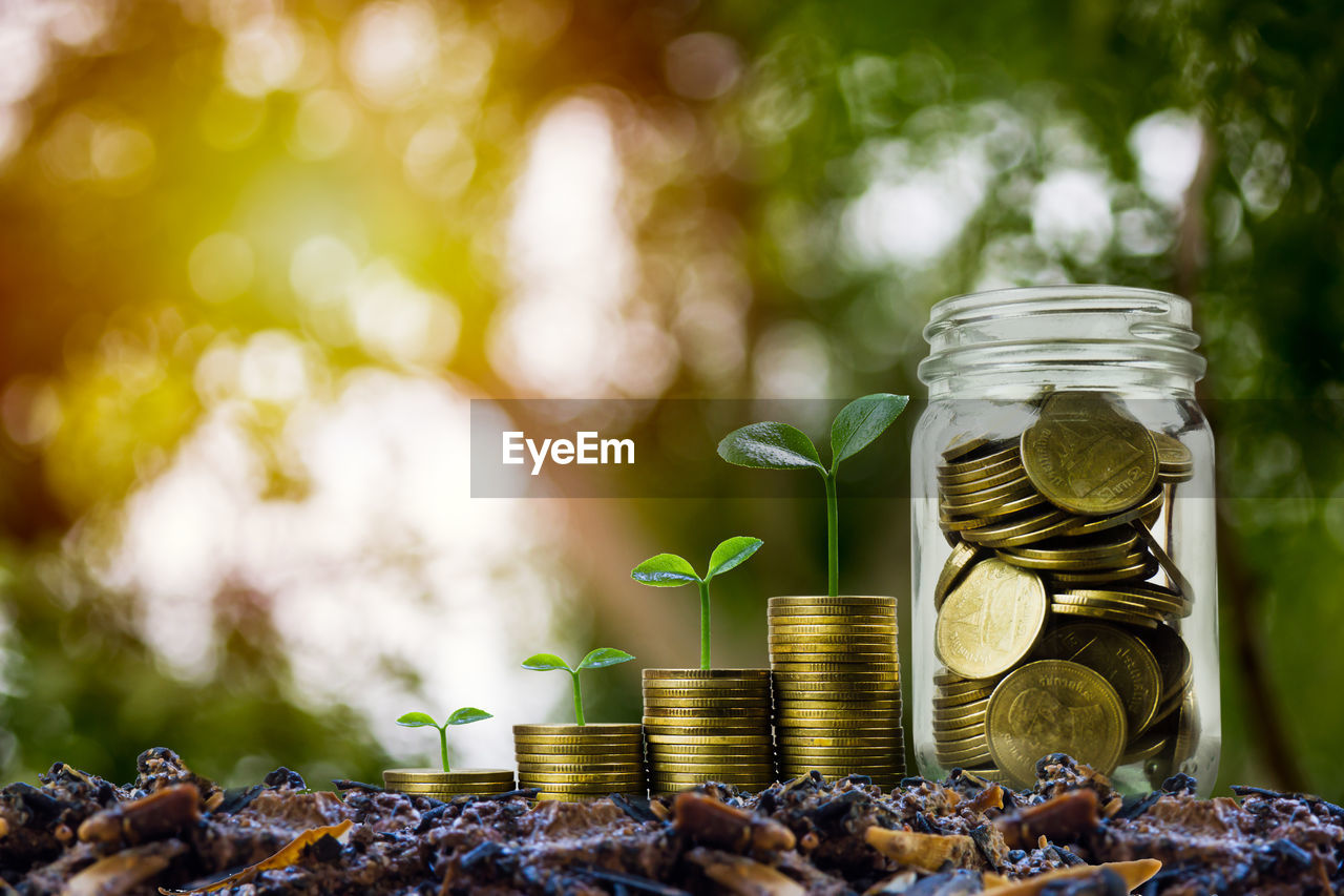 coin, finance, savings, wealth, business, currency, jar, selective focus, leaf, focus on foreground, container, plant part, plant, large group of objects, growth, close-up, no people, finance and economy, nature, investment, economy, making money