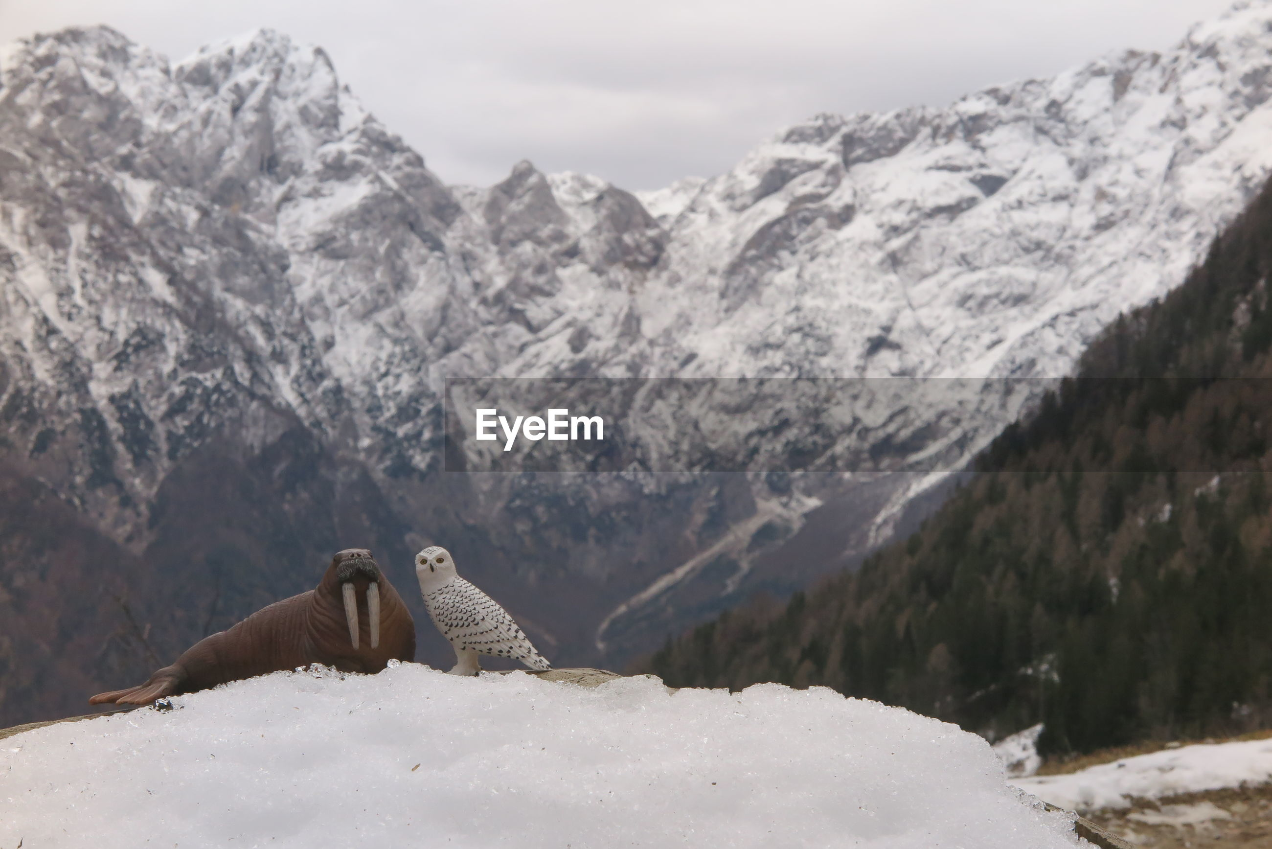 Scenic view of snowcapped mountains with toy walrus and owl in the foreground