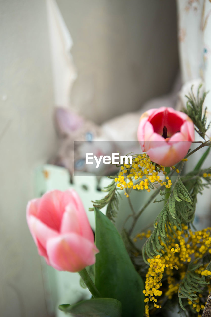 flowering plant, flower, beauty in nature, plant, vulnerability, fragility, freshness, petal, pink color, nature, flower head, close-up, inflorescence, growth, no people, yellow, selective focus, day, representation, outdoors, flower arrangement, bouquet