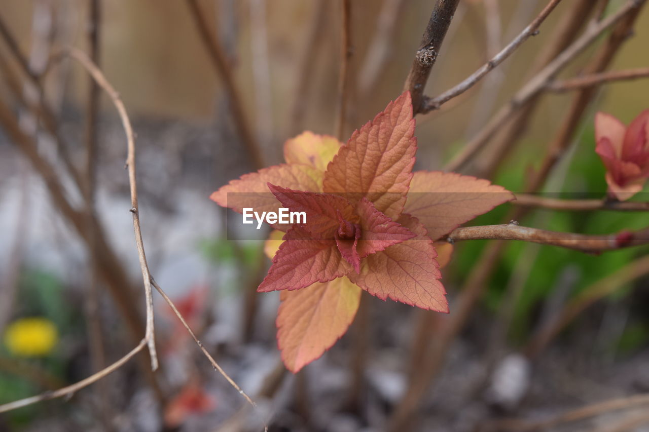 plant, plant part, leaf, focus on foreground, close-up, autumn, nature, day, no people, growth, beauty in nature, change, vulnerability, fragility, outdoors, tree, dry, leaves, selective focus, branch, natural condition
