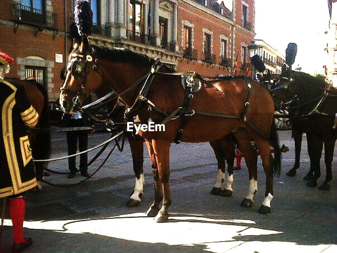 horse, working animal, horse cart, transportation, domestic animals, mode of transport, horsedrawn, built structure, animal themes, architecture, mammal, building exterior, day, outdoors, city, no people