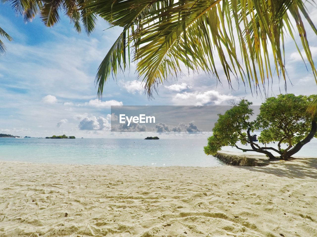 tree, water, beach, sea, land, sky, beauty in nature, tropical climate, scenics - nature, cloud - sky, tranquility, palm tree, plant, tranquil scene, sand, nature, no people, day, horizon over water, palm leaf, coconut palm tree, tropical tree