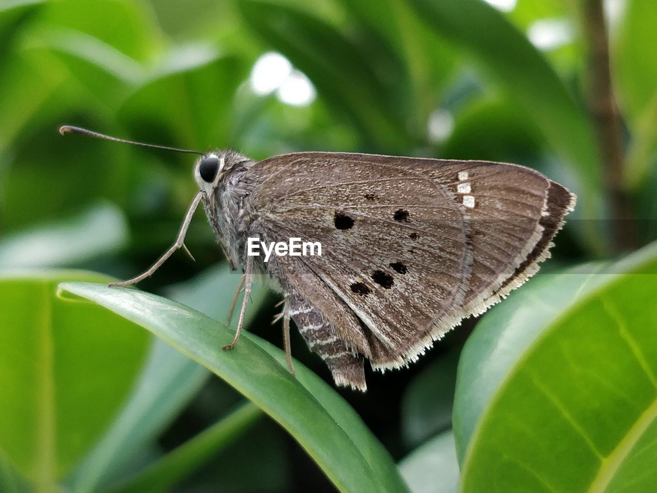 animal themes, animal, one animal, insect, invertebrate, animal wildlife, animals in the wild, plant part, leaf, close-up, green color, animal wing, focus on foreground, butterfly - insect, animal antenna, no people, plant, nature, beauty in nature, day, butterfly, moth