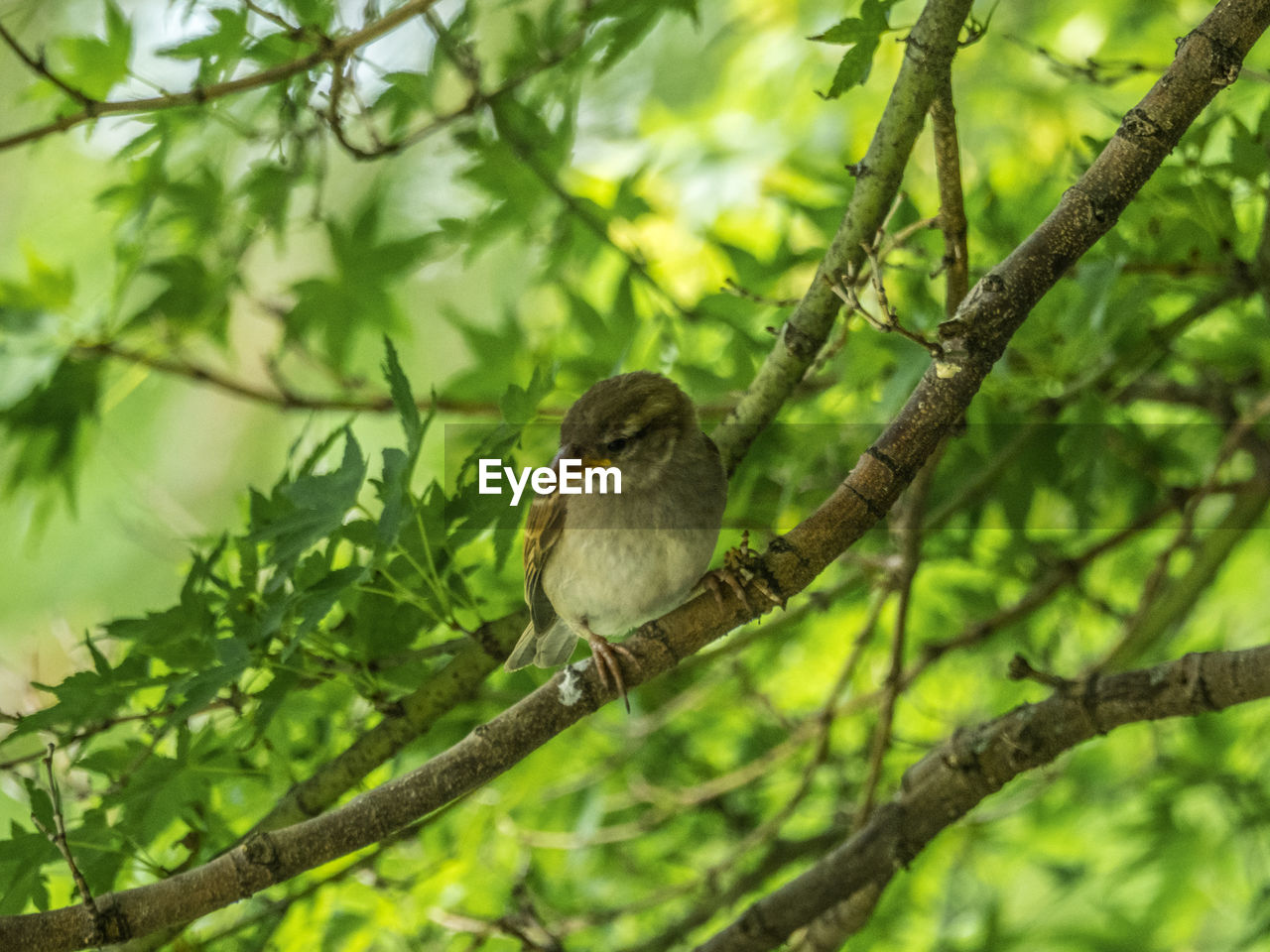 animal themes, animal, vertebrate, one animal, animal wildlife, animals in the wild, branch, perching, bird, plant, tree, nature, day, green color, no people, focus on foreground, plant part, selective focus, leaf, outdoors