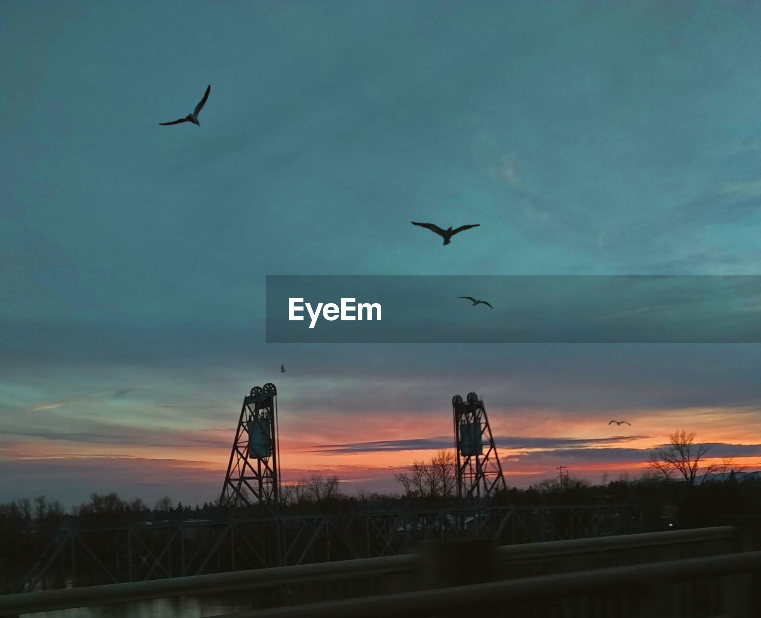 sky, flying, sunset, vertebrate, animal themes, bird, cloud - sky, silhouette, animal, group of animals, animal wildlife, animals in the wild, beauty in nature, nature, no people, mid-air, scenics - nature, low angle view, transportation, outdoors