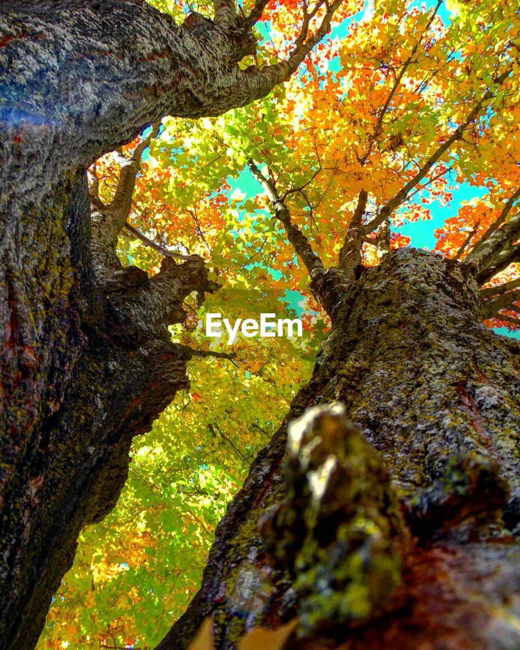 tree, nature, tree trunk, beauty in nature, growth, branch, autumn, day, no people, low angle view, outdoors, tranquility, tranquil scene, scenics, leaf, close-up, freshness