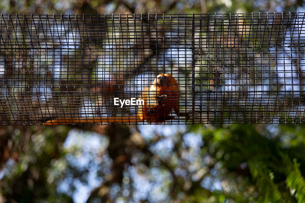 animal, animal wildlife, animal themes, animals in the wild, focus on foreground, one animal, day, vertebrate, no people, close-up, tree, nature, bird, low angle view, outdoors, animals in captivity, insect, metal, invertebrate, animal wing