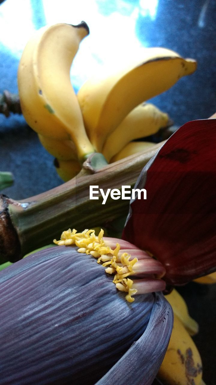 freshness, yellow, day, flower, banana, food, close-up, outdoors, healthy eating, no people, fruit, fragility, nature, flower head