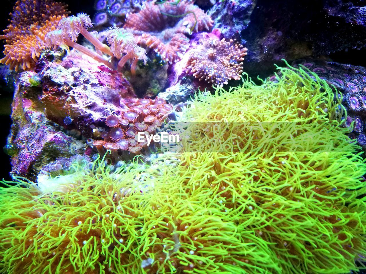 underwater, sea life, undersea, coral, water, sea, animal themes, sea anemone, animals in the wild, no people, nature, one animal, clown fish, beauty in nature, close-up, day