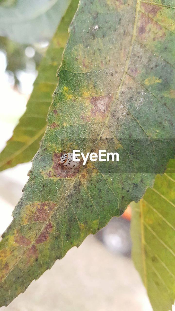 leaf, one animal, green color, insect, animals in the wild, day, animal themes, close-up, nature, focus on foreground, outdoors, animal wildlife, growth, plant, no people, beauty in nature