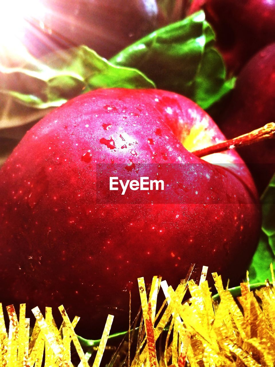 red, food and drink, growth, fruit, close-up, food, freshness, nature, no people, outdoors, leaf, day, healthy eating, tree, plant, beauty in nature