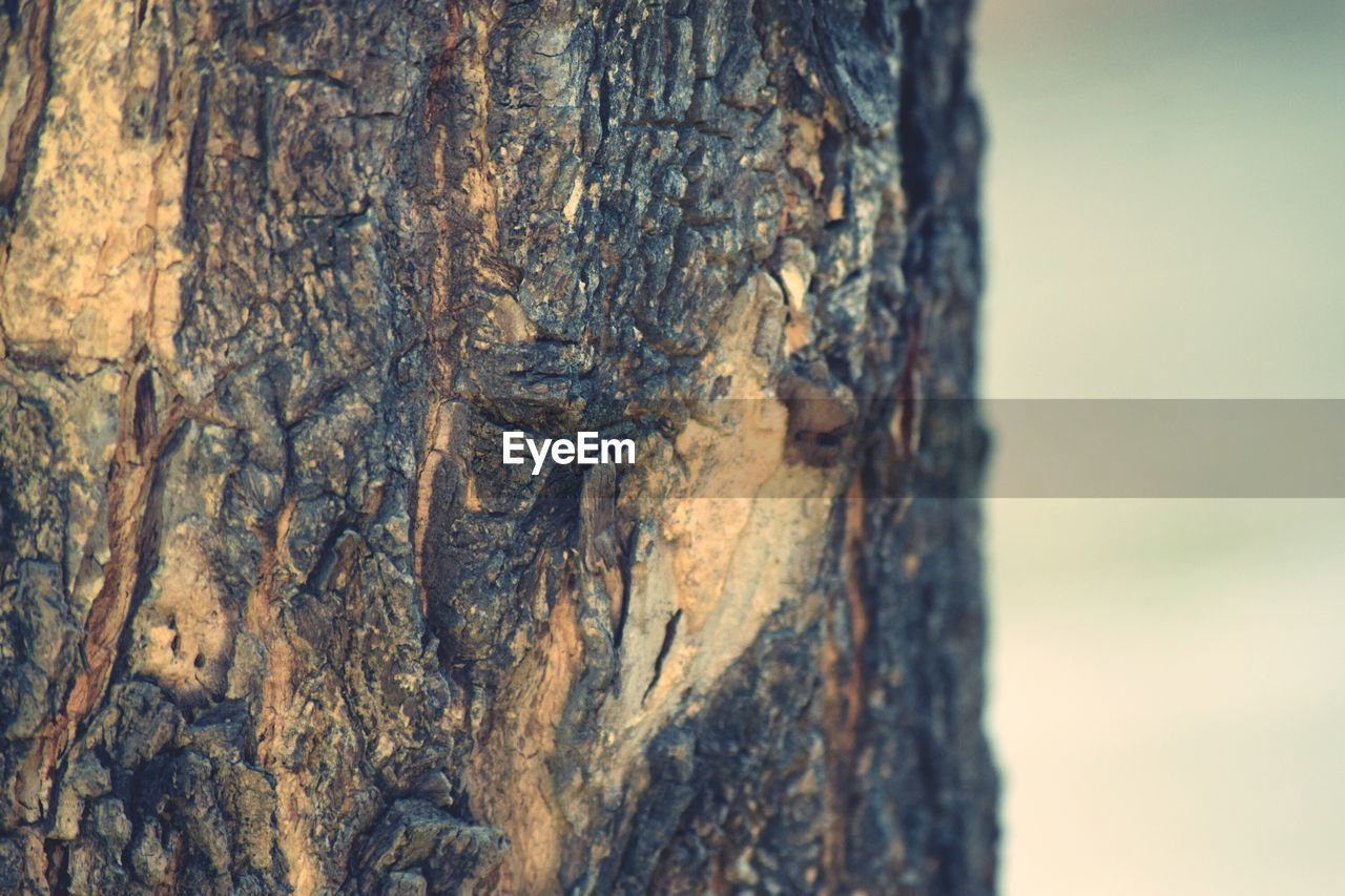 trunk, tree trunk, tree, textured, close-up, rough, focus on foreground, nature, plant, day, no people, wood - material, bark, plant bark, outdoors, pattern, brown, natural pattern, beauty in nature, selective focus, textured effect