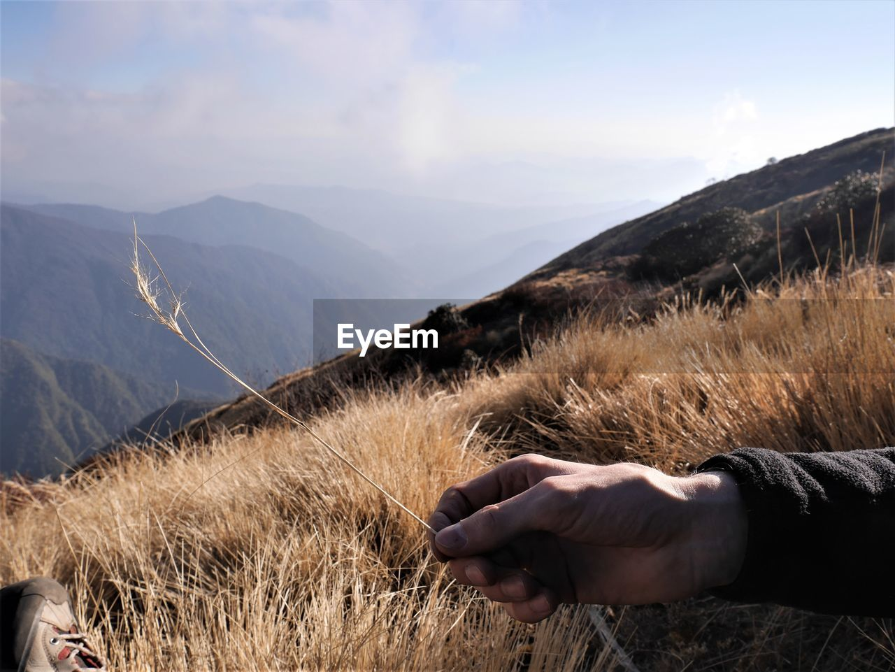 Cropped hand of man holding grass on mountain against cloudy sky