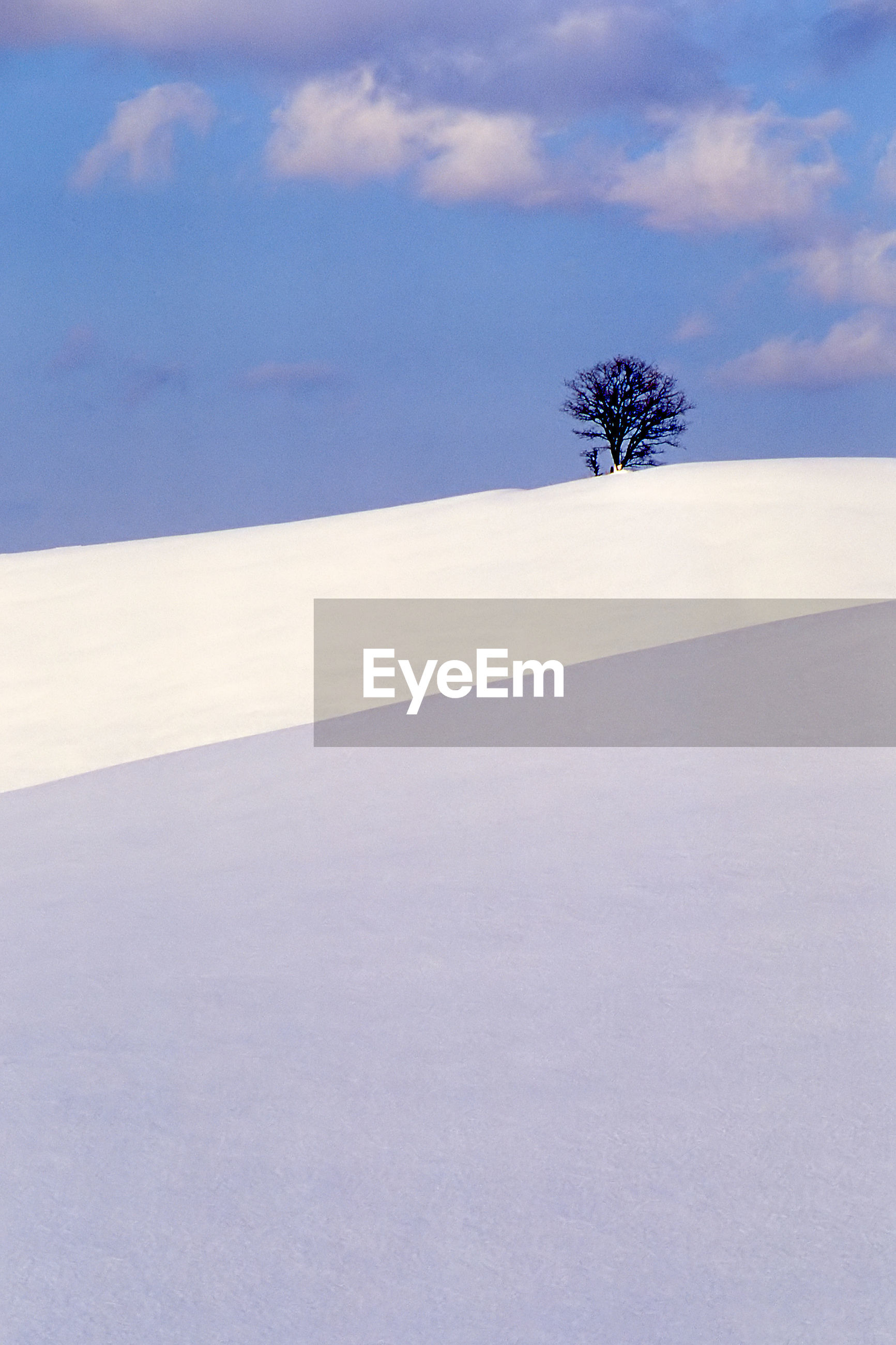 PLANT ON SNOW COVERED LAND AGAINST SKY