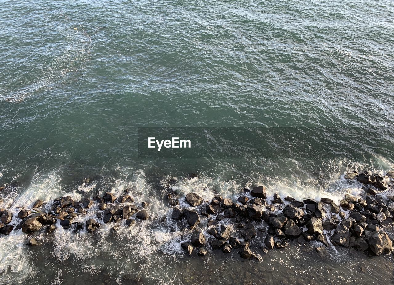 water, large group of animals, group of animals, sea, animal, animal themes, animal wildlife, animals in the wild, vertebrate, high angle view, rock, no people, nature, day, solid, rock - object, beauty in nature, mammal, motion, outdoors, marine, flock of birds