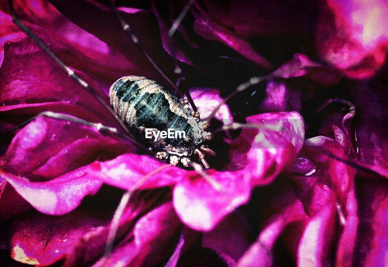 purple, animal themes, animals in the wild, one animal, insect, nature, no people, wildlife, beauty in nature, petal, flower, day, outdoors, animal wildlife, close-up, fragility, flower head, freshness