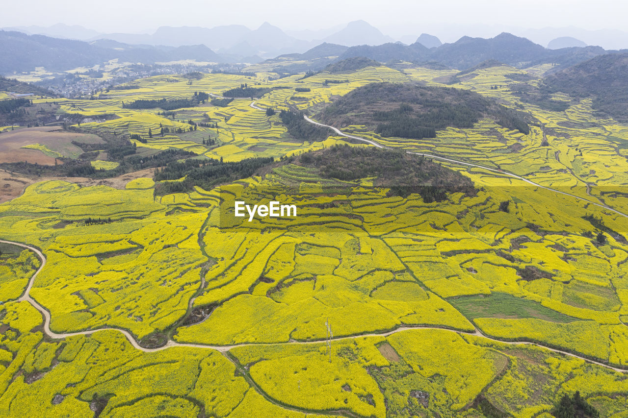 HIGH ANGLE VIEW OF YELLOW FIELDS AGAINST MOUNTAIN