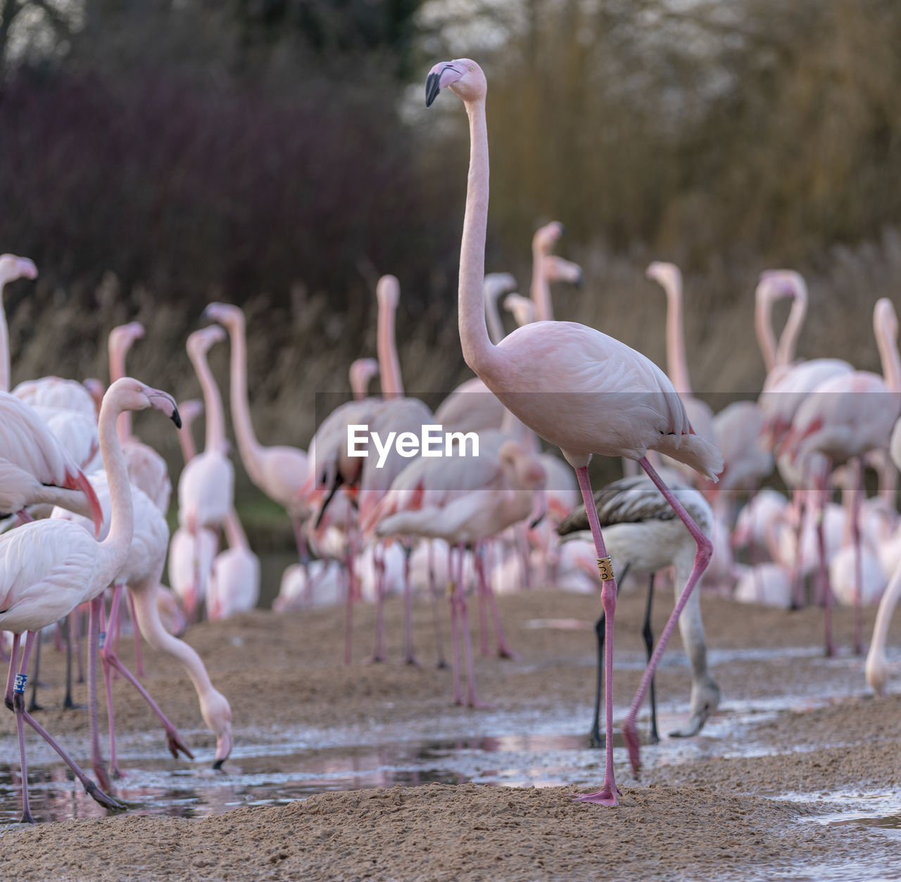 group of animals, animal themes, animals in the wild, flamingo, animal, bird, animal wildlife, vertebrate, large group of animals, water, day, no people, nature, focus on foreground, beauty in nature, land, lake, pink color, zoology, flock of birds, animal neck, freshwater bird
