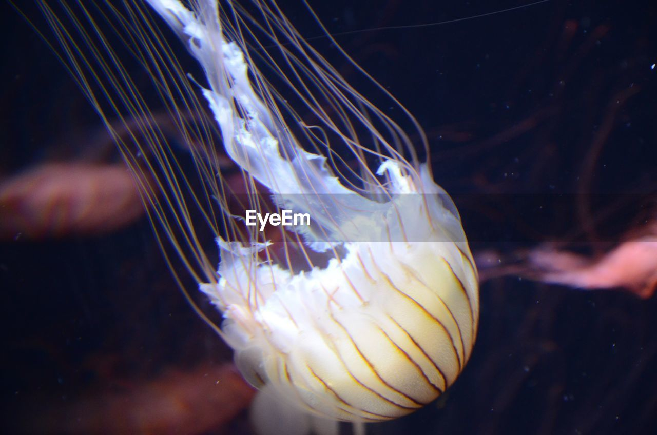 Close-Up Of Jellyfish Against Blurred Background