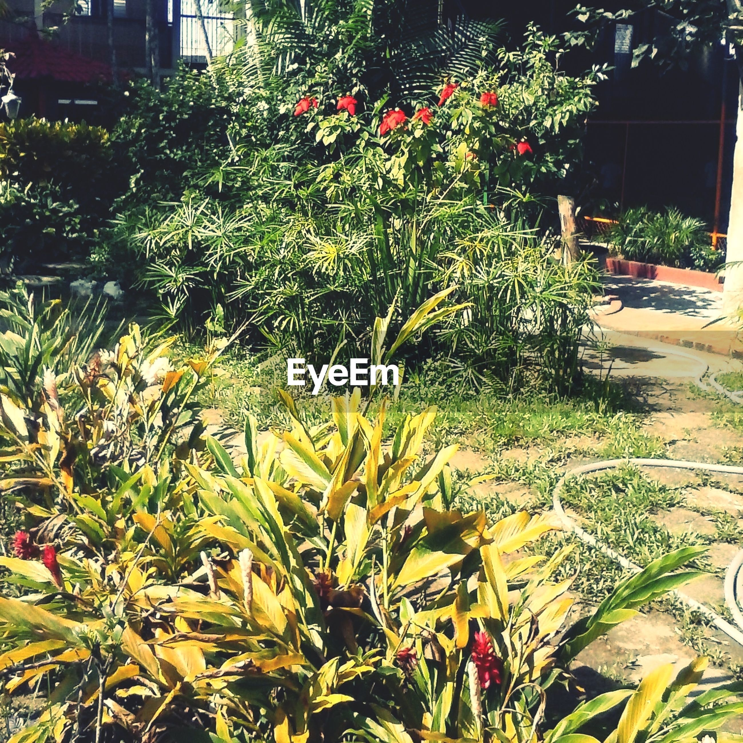 growth, plant, building exterior, flower, freshness, nature, leaf, growing, green color, built structure, house, architecture, beauty in nature, front or back yard, tree, outdoors, no people, day, sunlight, branch