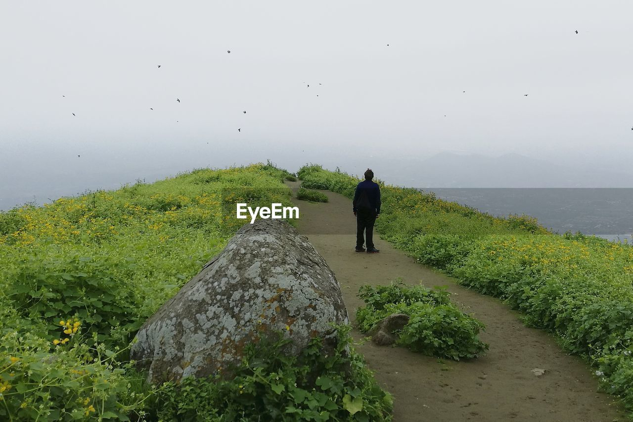 Man standing on footpath amidst plants against sky during foggy weather