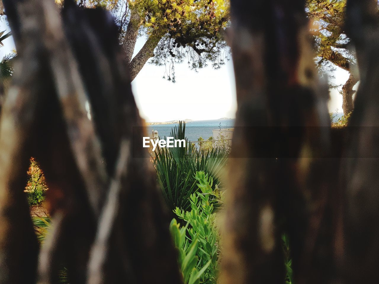 growth, tree, focus on background, tree trunk, nature, selective focus, no people, plant, day, tranquility, beauty in nature, outdoors, close-up, scenics, water, grass, sky