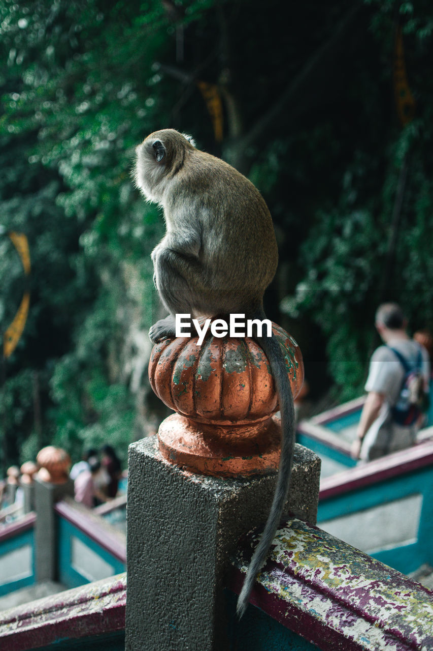 focus on foreground, primate, animal wildlife, sculpture, animals in the wild, art and craft, day, no people, vertebrate, statue, one animal, representation, creativity, mammal, human representation, nature, outdoors