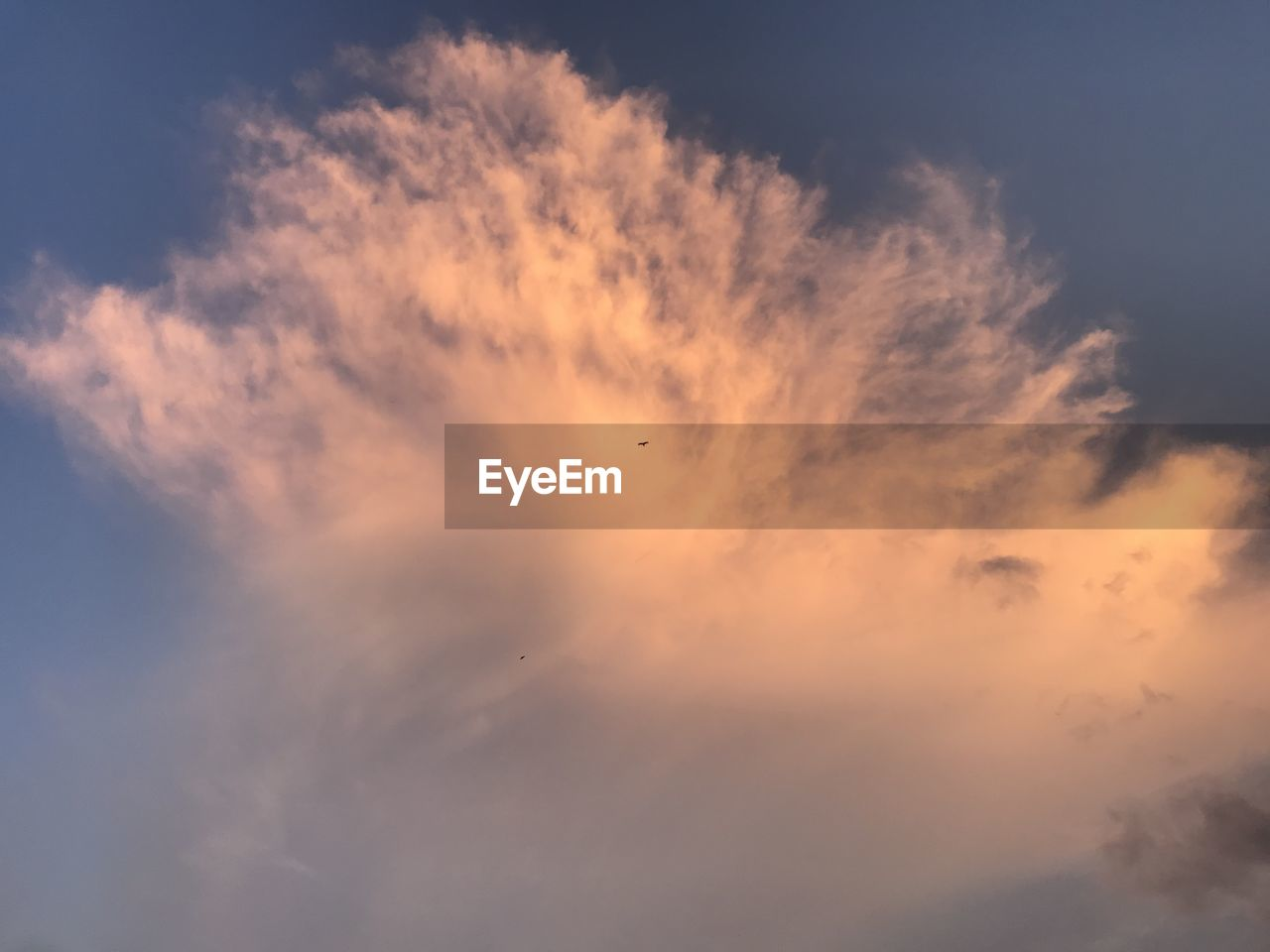 sky, cloud - sky, beauty in nature, low angle view, scenics - nature, sunset, tranquility, tranquil scene, bird, vertebrate, animal themes, animal, no people, nature, silhouette, orange color, idyllic, animals in the wild, flying, animal wildlife, outdoors