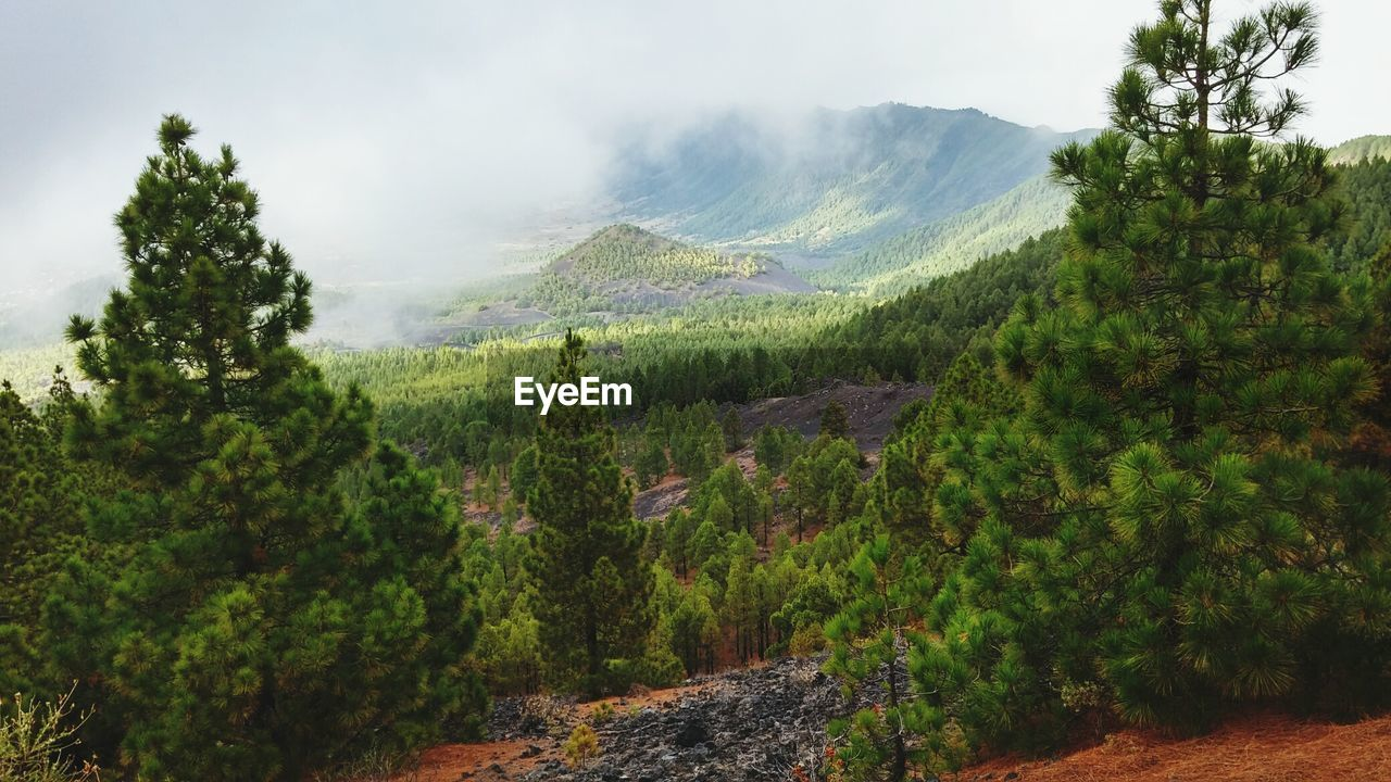 Scenic View Of Trees And Mountain