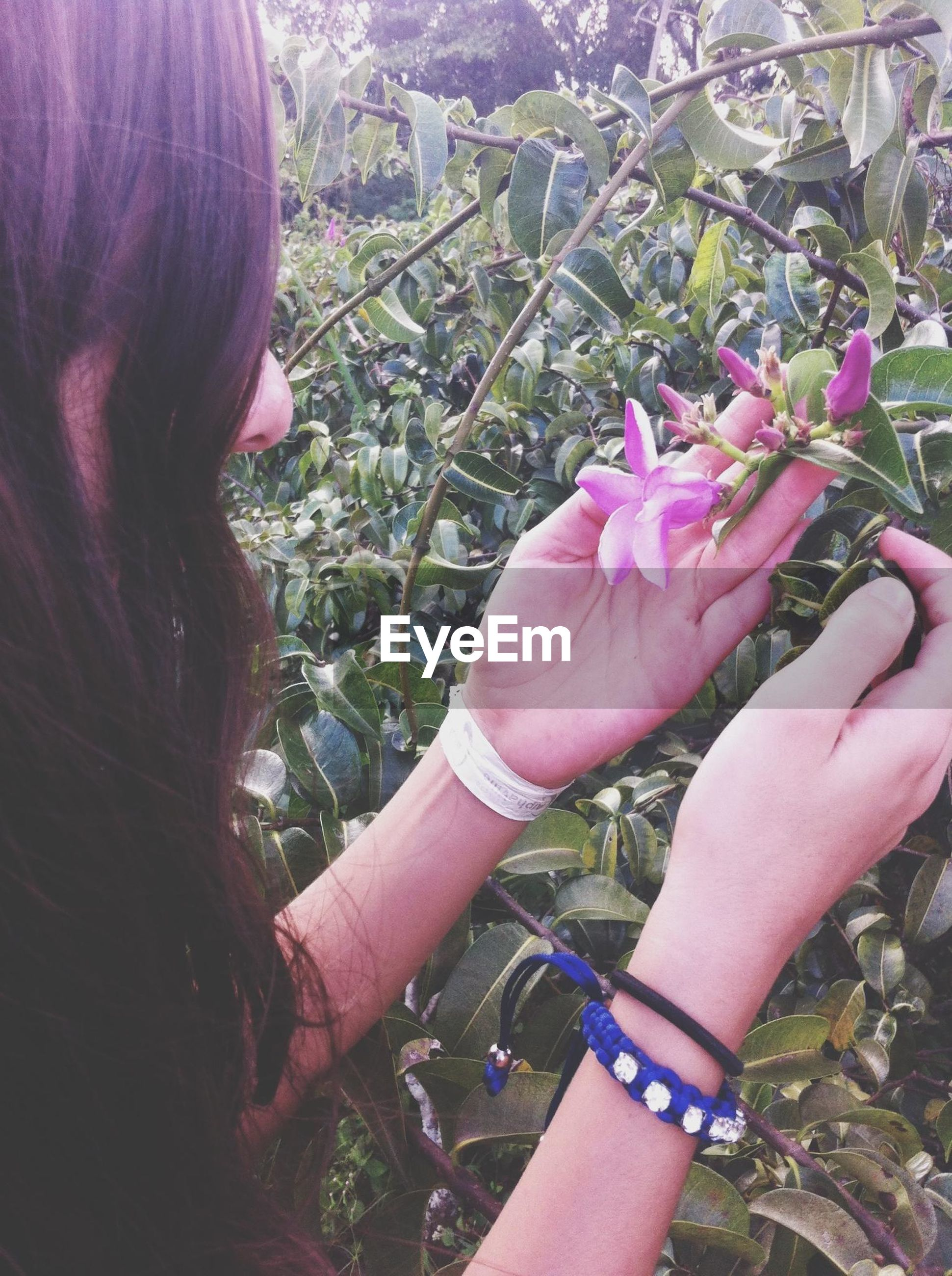 person, holding, flower, part of, cropped, pink color, human finger, freshness, lifestyles, focus on foreground, close-up, leisure activity, fragility, personal perspective, flower head, unrecognizable person