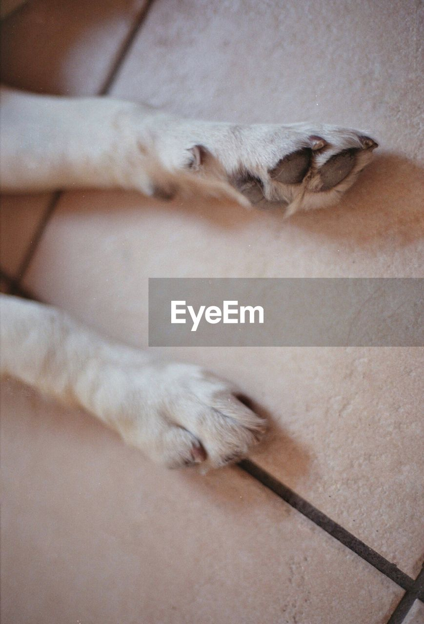 High Angle View Of Animal Leg