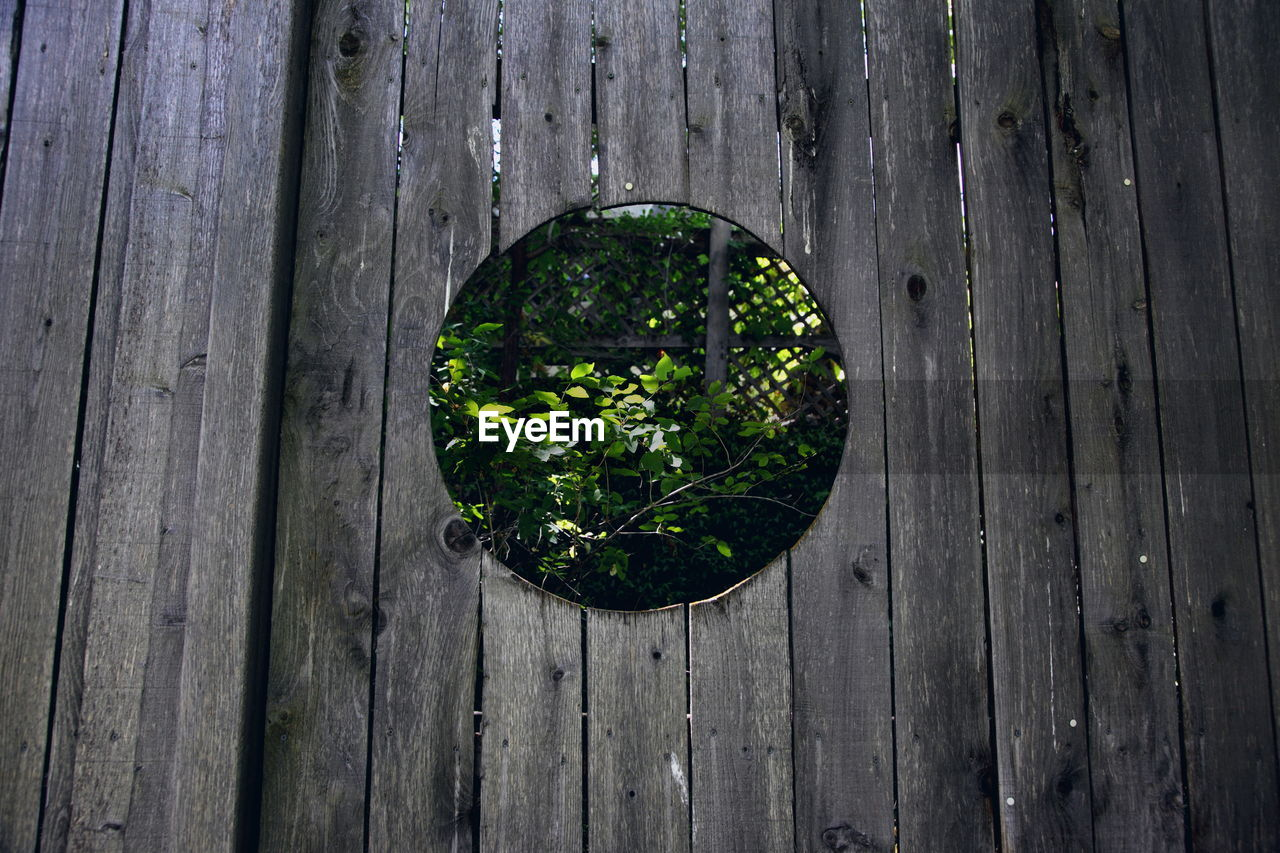 Plants Seen Through Circular Window Of Wooden Wall