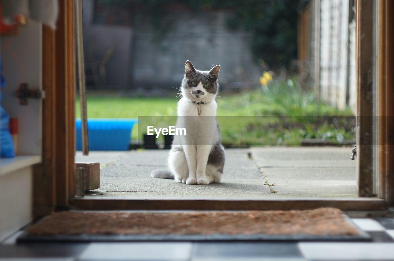 Cat sitting in front of door