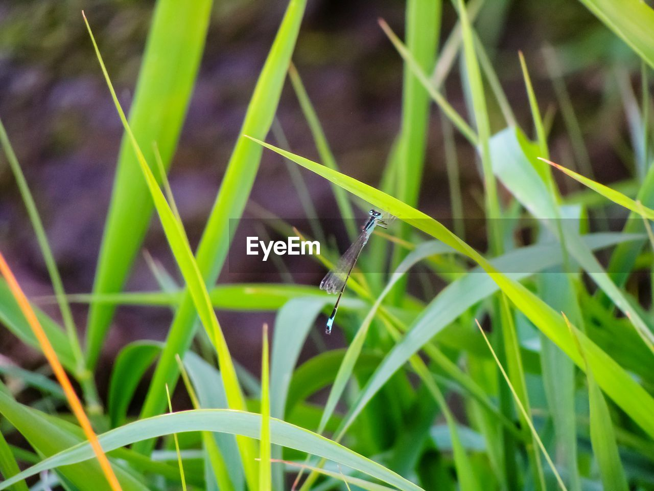 growth, grass, nature, green color, plant, outdoors, day, close-up, beauty in nature, freshness, no people, fragility, water