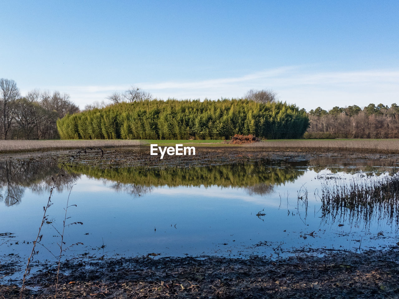 reflection, tree, tranquil scene, nature, water, lake, scenics, beauty in nature, tranquility, outdoors, no people, day, sky