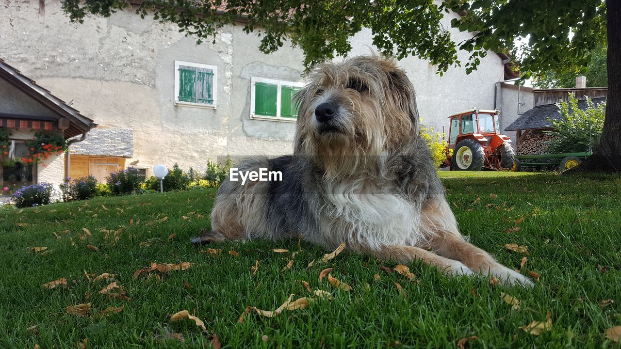 grass, dog, pets, one animal, domestic animals, animal themes, built structure, building exterior, outdoors, architecture, day, mammal, no people