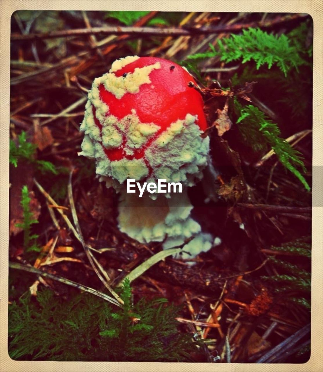 mushroom, nature, growth, fungus, red, close-up, beauty in nature, no people, toadstool, outdoors, field, day, freshness, fly agaric mushroom, fragility, forest, grass, fly agaric