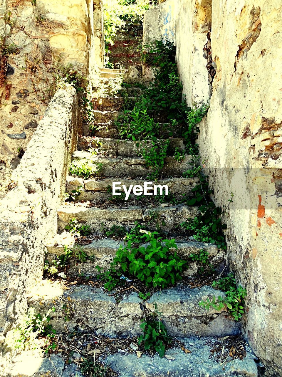 Plants Growing On Staircase By Old Building