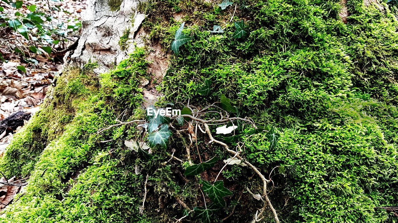 nature, green color, growth, tree, no people, day, outdoors, forest, moss, plant, leaf, animal themes, grass, beauty in nature, branch