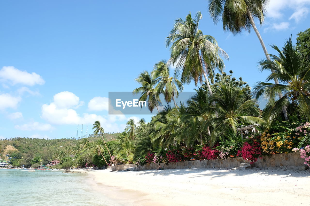 sky, plant, tree, tropical climate, growth, beauty in nature, nature, palm tree, water, tranquility, no people, cloud - sky, land, beach, day, tranquil scene, scenics - nature, sea, green color, outdoors, coconut palm tree