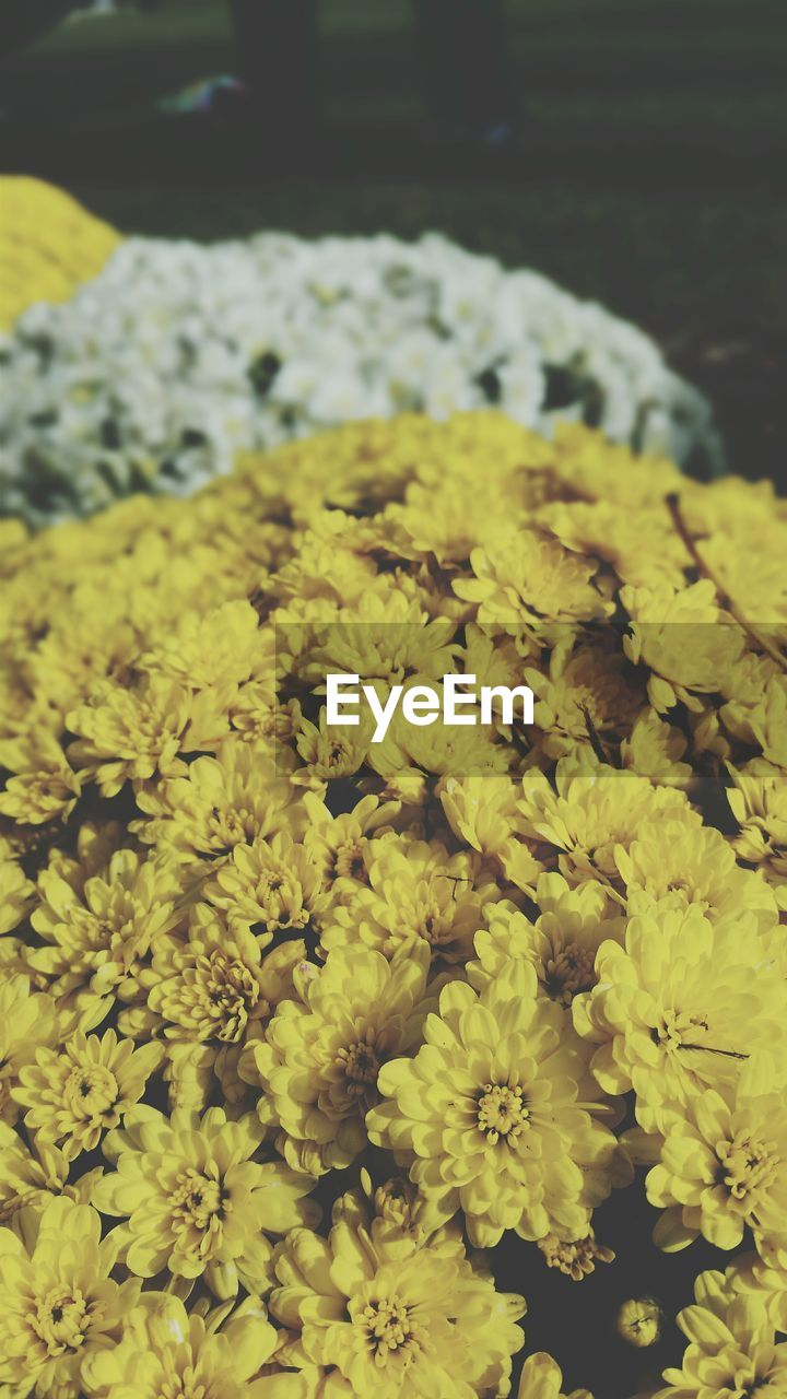 flower, yellow, nature, freshness, beauty in nature, fragility, no people, plant, growth, close-up, outdoors, day, flower head