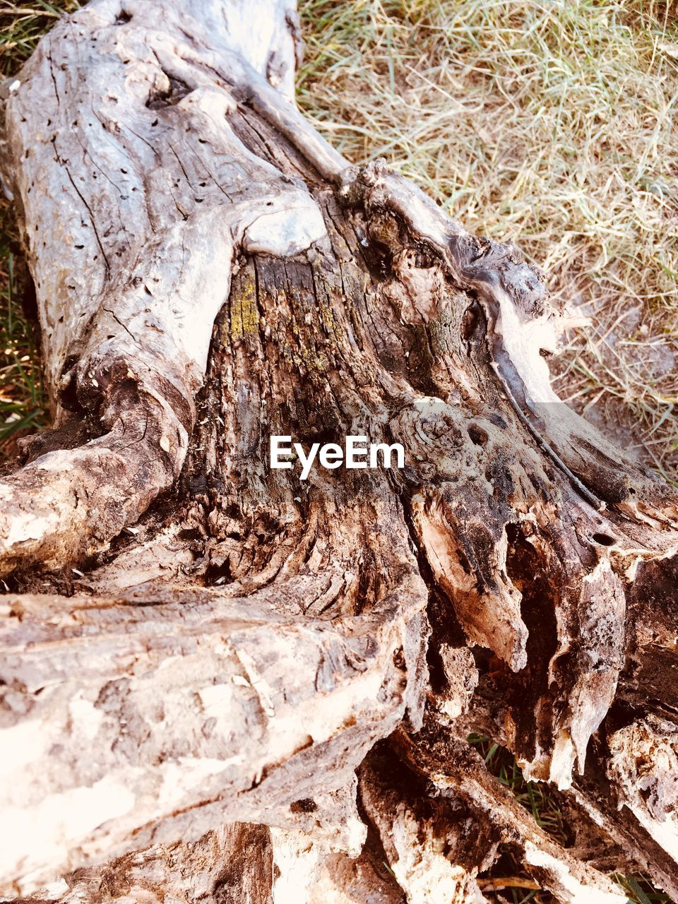 tree, wood - material, tree trunk, textured, trunk, nature, bark, wood, day, close-up, no people, plant, land, rough, outdoors, log, forest, dead plant, beauty in nature, tree stump, driftwood