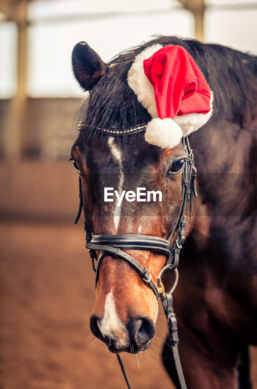 domestic, domestic animals, mammal, pets, animal themes, livestock, animal, horse, one animal, focus on foreground, vertebrate, animal wildlife, bridle, close-up, animal body part, animal head, working animal, day, brown, one person, herbivorous, animal mouth